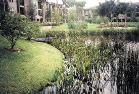 aquagenix-pond-after