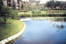 aquagenix-pond-before