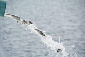 aquagenix-fish-stocking