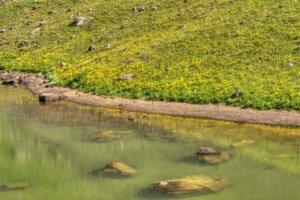 aquagenix-pond-bank-restoration