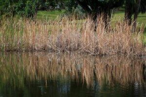 aquagenix-vegetation-removal