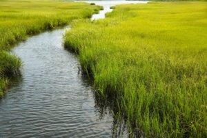 aquagenix-wetlands