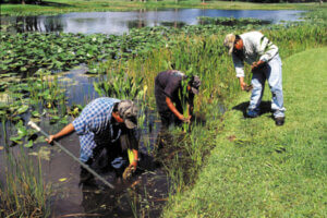 img-aquagenix-wetland-planting