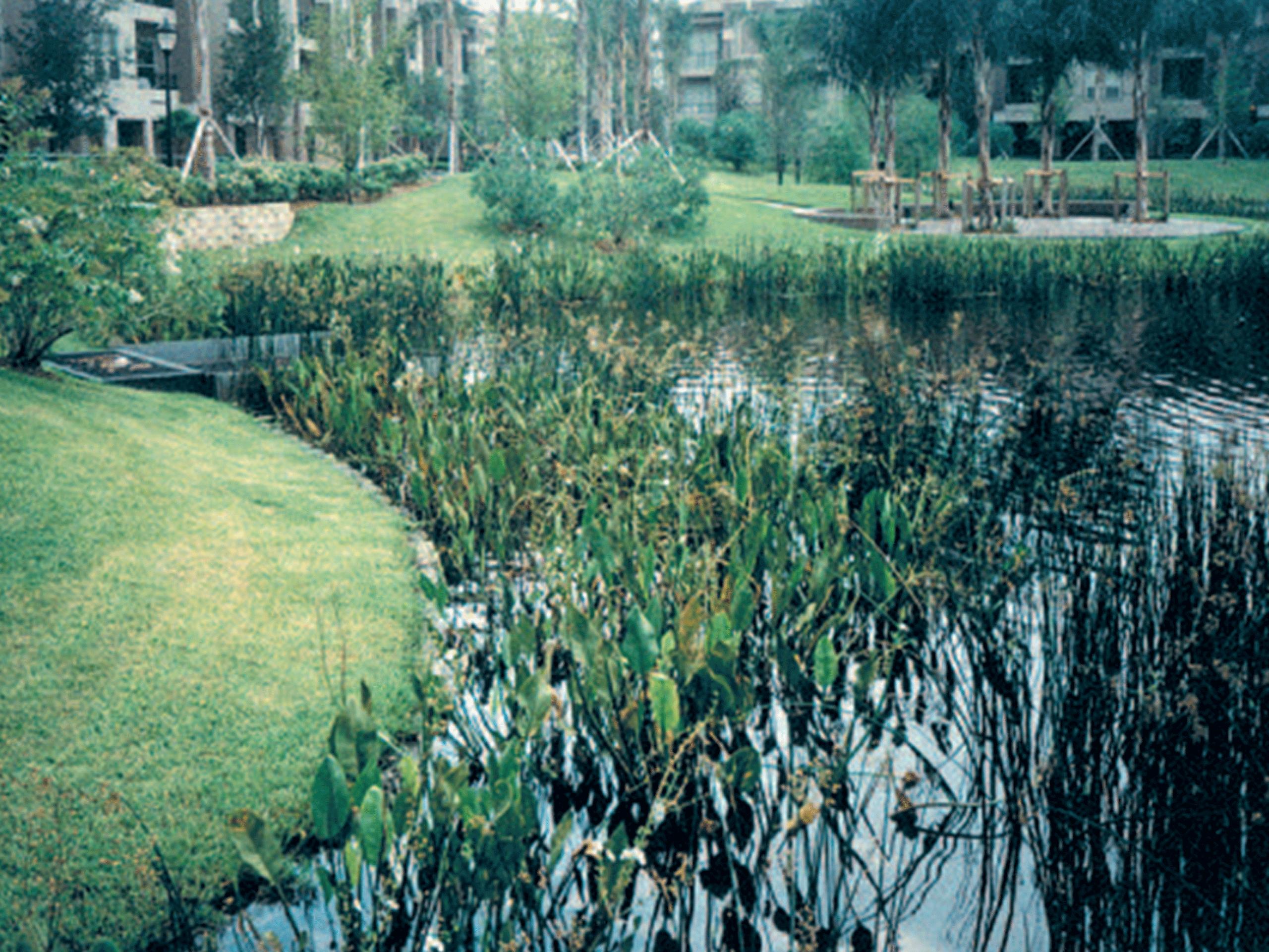 img-aquagenix-wetlandprogram-before